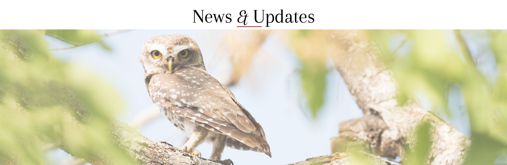 OVMA News and Updates